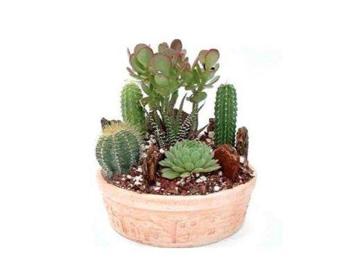 Cactus Garden Small  Green Gift that Ships Via 2-Day Air