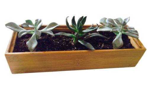 Succulents Cactus Garden Growing Kit Wooden Bamboo Planter 3x9  Potting Soil  Rocks