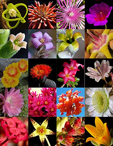 FLOWERING SUCCULENT MIX rare plant exotic cactus flower succulent seed 100 seeds