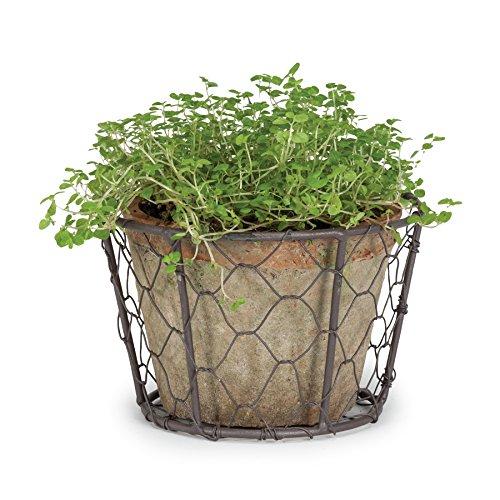 Abbott Collection Single Moss Pot In Basket