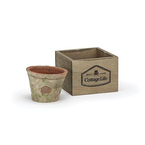 Cottage Life 45 Large Vintage Terracotta Green Moss Pot Planter In Wood Basket
