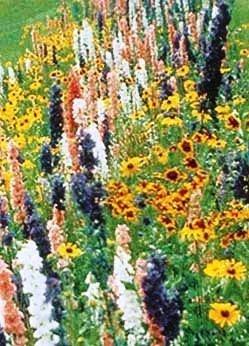 Davids Garden Seeds Wildflower Butterfly Hummingbird Mix DGS30062A 500 Open Pollinated Seeds