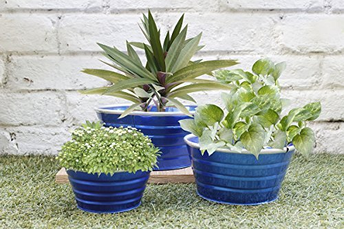 Diwali Gifts Blue Indoor Garden Planters Set Of 3 - Flower Bud Plant Pots – Window Planter - Home Gardening Set