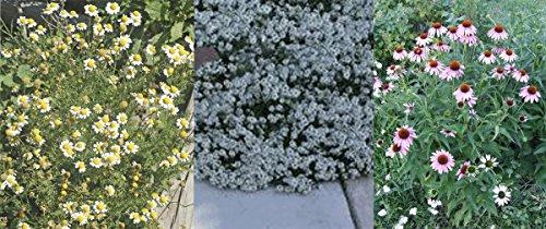 Set of 3 Heirloom Flower Seed Packets