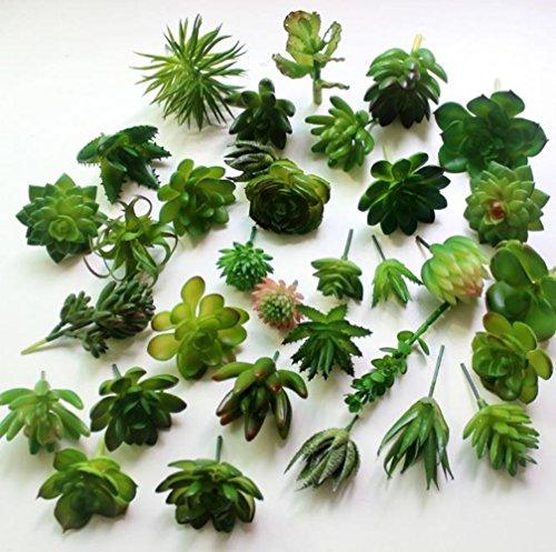 Dutch Brook 5Pcs Different Succulents Artificial Cactus Plants for Office Home Garden Decor Sent Randomly