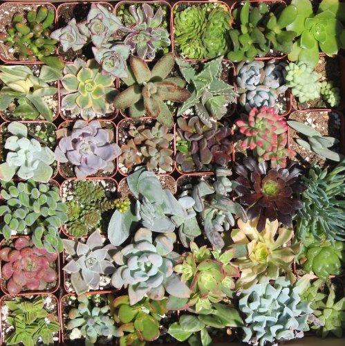 Shop Succulents Green Succulent collection Of 20