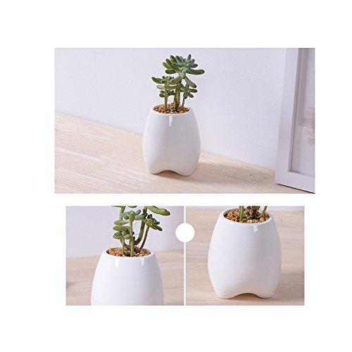 Succulent Planters Y&MTMElegance Ceramic Flower Pots Indoorcactus flower pot for SucculentCactusDecorative Flower
