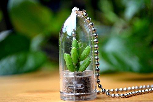 Coral Cactus Plant Necklace Cactus Terrarium Gift