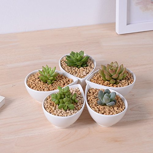 Succulent Pot Herb Planter or Cactus Pot - White Minimalist Teardrop Pot - 41 x 19 x 3 inches - Indoor Outdoor Planter by Gander Lane