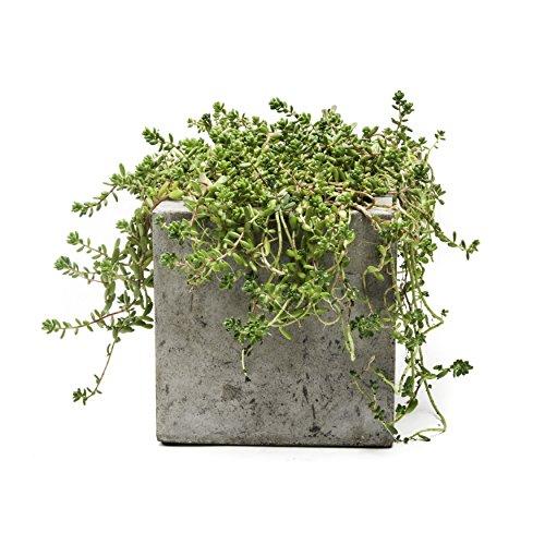 Repose Cubo Succulent Planter Small