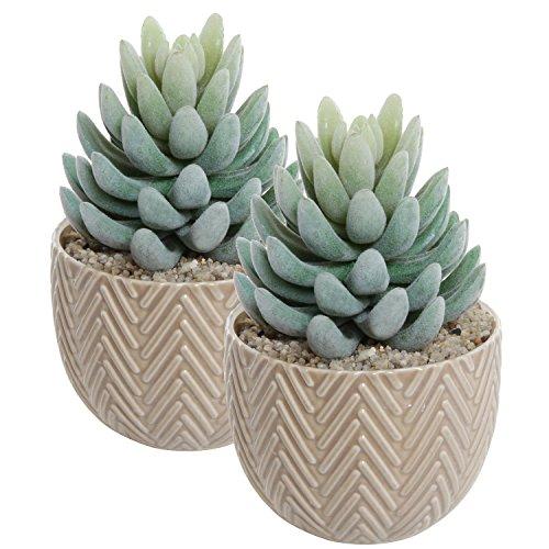 Set Of 2 Small Decorative Beige Ceramic Succulent Planter Pots  Mini Indooramp Outdoor Cactus Containers