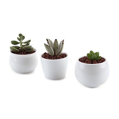 T4u 25275275 Inch Ceramic White Collection No31 Sucuulent Plant Potcactus Plant Pot Flower Potcontainer