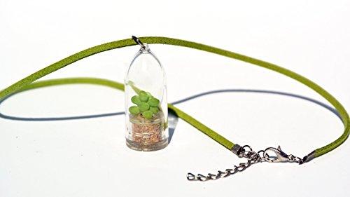 Live Succulent Terrarium Flower Necklace - Bubbly - Live Cacti Succulent Plant Necklace Keychain- Living plants Neckalce Terrarium Capsule - Boo-Boo Plant Bubbly  18 Necklace Suede Green