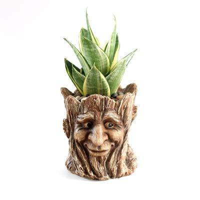 TOMHY Planting Succulents Small Creative Cartoon Bonsai Pots for Kids Gift Desktop Plant Pot  F-Young Man