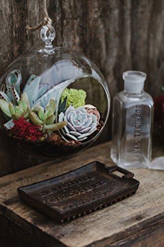 Hanging Globe Glass Terrarium - Indoor Succulent Garden plants Included