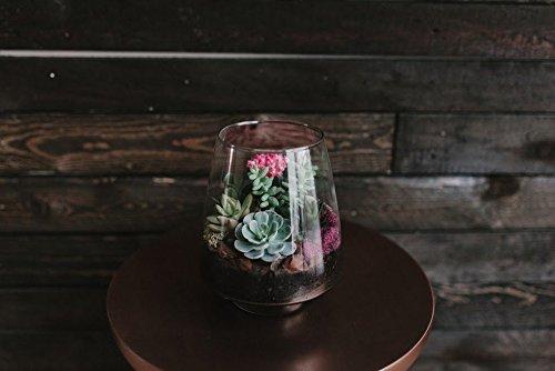 Signature Glass Terrarium - Indoor Succulent Garden Plants Included