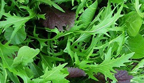 1000 Mizuna Seeds ~ Japanese Salad Greens ~ Exotic Garden Vegetable ~ Annual