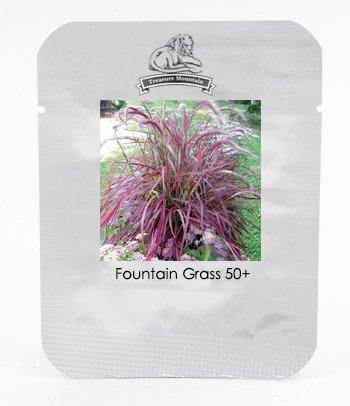 Half-hardy Perennial Pennisetum setaceum Fireworks Fountain Grass Seeds Professional Pack 50 Seeds  Pack Pennisetum Grass