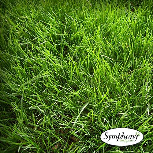 Symphony Perennial Ryegrass Sod 500 Sq Ft  1 Pallet