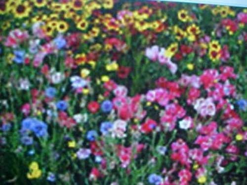 Fall Perennial 25-VARIEY Wild Flower Seeds