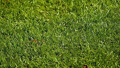 Perennial Ryegrass Seed Blend 1000 Sqft