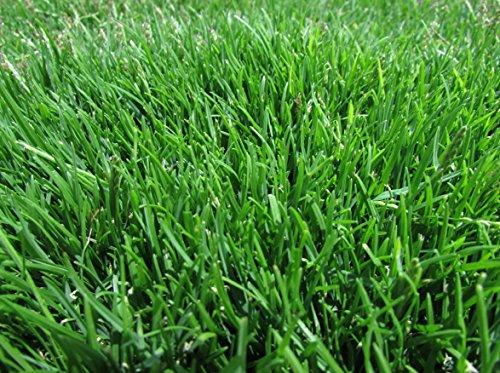 Emerald Zoysia Zoysia Emerald grass seeds-18 lb