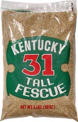 Barenbrug USA 12129 Kentucky 31 Tall Fescue Grass Seed