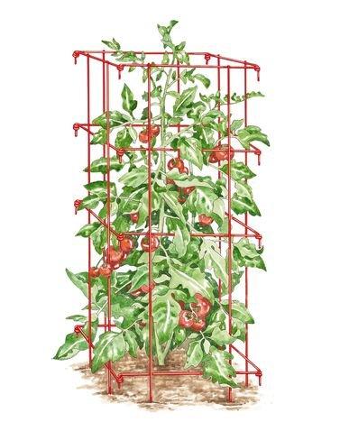 Square Tomato Cage Single Red