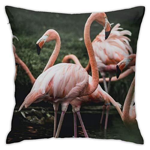 QLMY Flamingo in Pond Design Pattern Casual Home Decoration Sofa Fashion Hug Pillowcase Craft Set Pillowcase Square 18 X 18 Inches