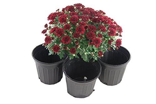 One Gallon Black Trade Pots - NurseryGreenhouse Pots - 106 Pots