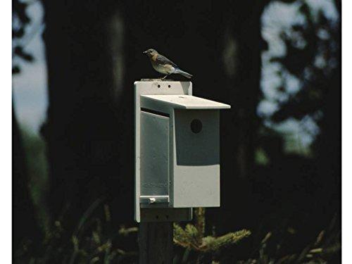 Best Bluebird House Money Can Buy - Bluebird Society Bluebird House - Help Protect The North American Bluebird