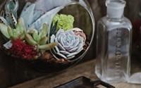 Hanging-Globe-Glass-Terrarium-Indoor-Succulent-Garden-plants-Included-12.jpg