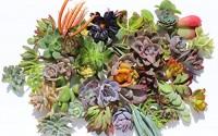 30-colorful-succulent-cuttings-48.jpg