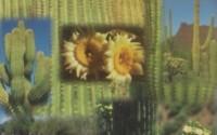 Grow-Your-Own-Giant-Saguaro-Contains-Aprox-100-Cactus-Seeds-Southwest-Novelty-Gift-Souvenir-Plant-Your-Own-Cactus-Garden-Cacti-48.jpg