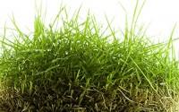 Zoysia-Grass-Seed-Blend-500-Sqft-11.jpg